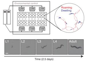 Ученые исследовали биологические основы индивидуальности на примере червей.