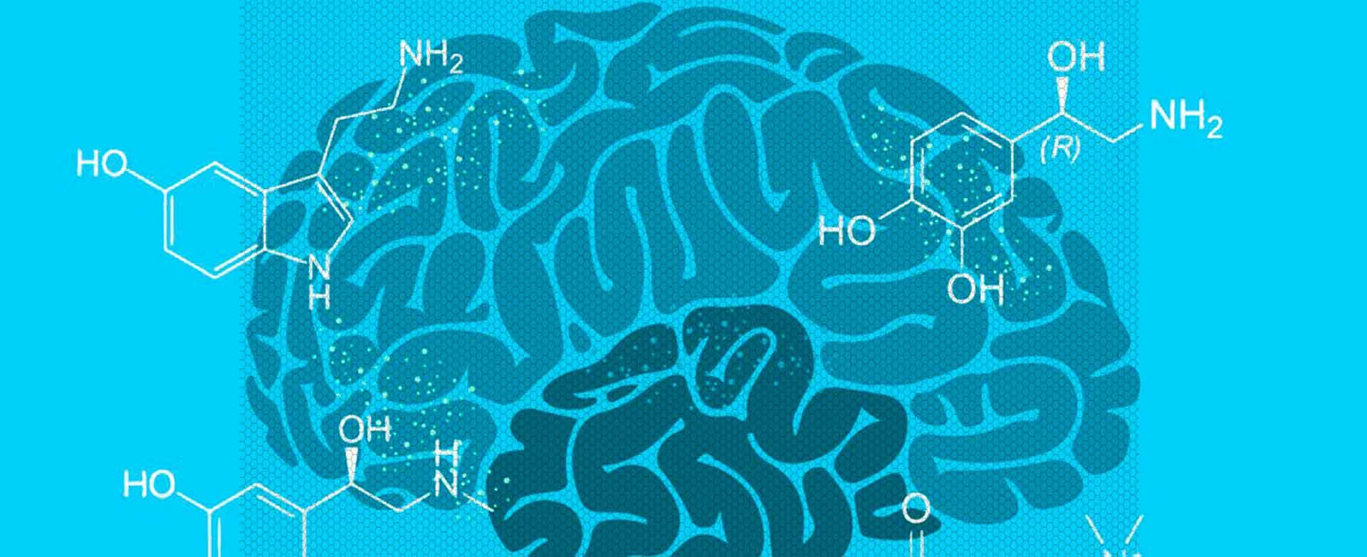 Не размер, а химический состав мозга сделал нас людьми