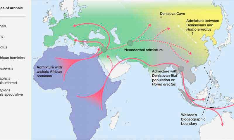 Загадка происхождения: исследователи объясняют, как Homo sapiens покорили мир