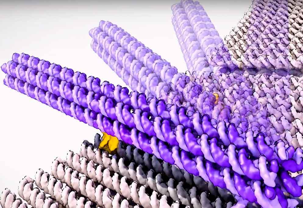Самоорганизующийся наноробот из ДНК