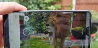 Лев в 3-Д поиске