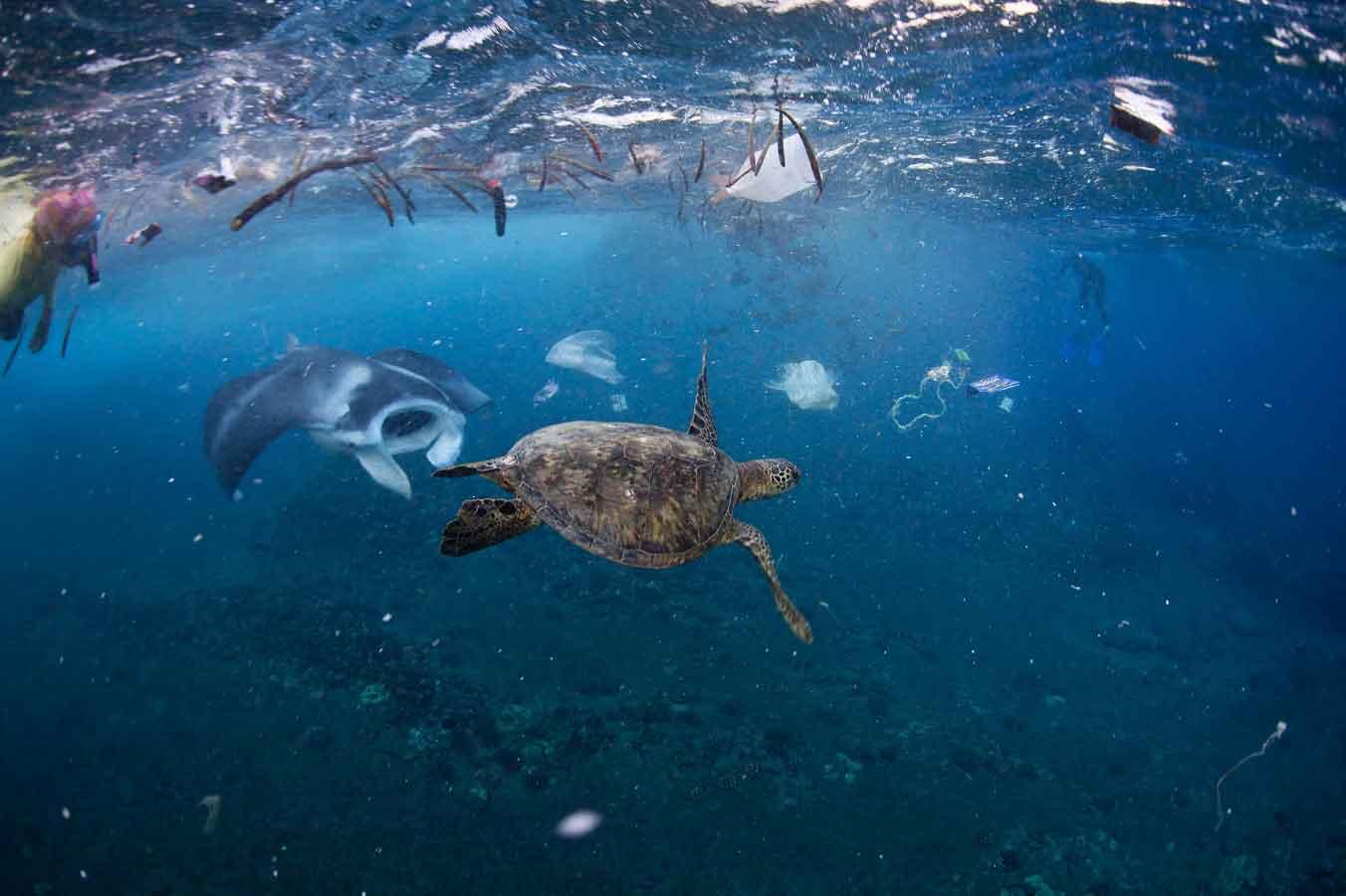 океан загрязняют пластиком