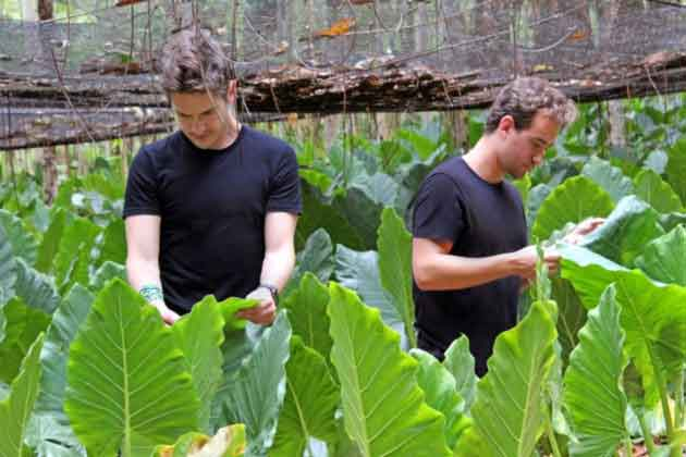 выращивание растений для производства кожи
