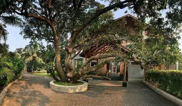 Дом-манго